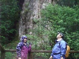 縄文杉 その1