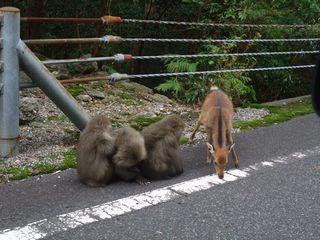 猿と鹿が仲良く