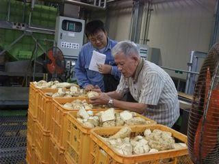 三岳酒造 洗浄・カットされたさつま芋
