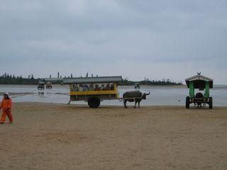 由布島へ渡る水牛車